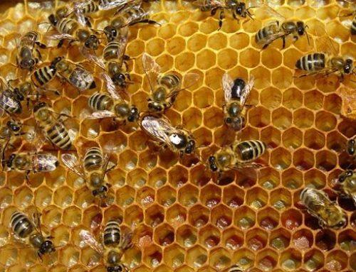 Υποχρεωτική η εγγραφή στο μητρώο της Π.Ε. των μικρών παραγωγών μελιού
